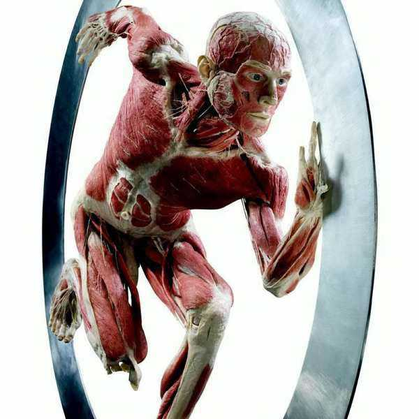movimento_body_worlds